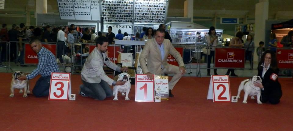 CEBI   Club Español del Bulldog Inglés España
