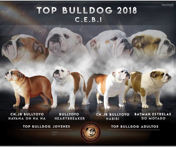 TOP BULLDOG 2018