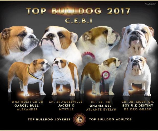 TOP_BULLDOG_2017