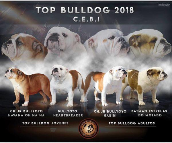 TOP BULLDOG 2018